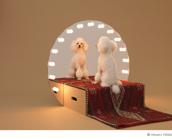 Architecture For Dogs?