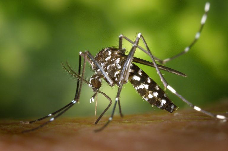How to Protect Your Home From Mosquitoes and Other Bugs